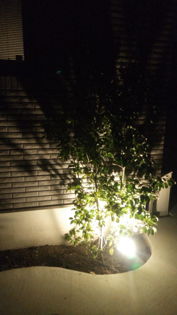 夜間のシンボルツリー(ライトアップ)