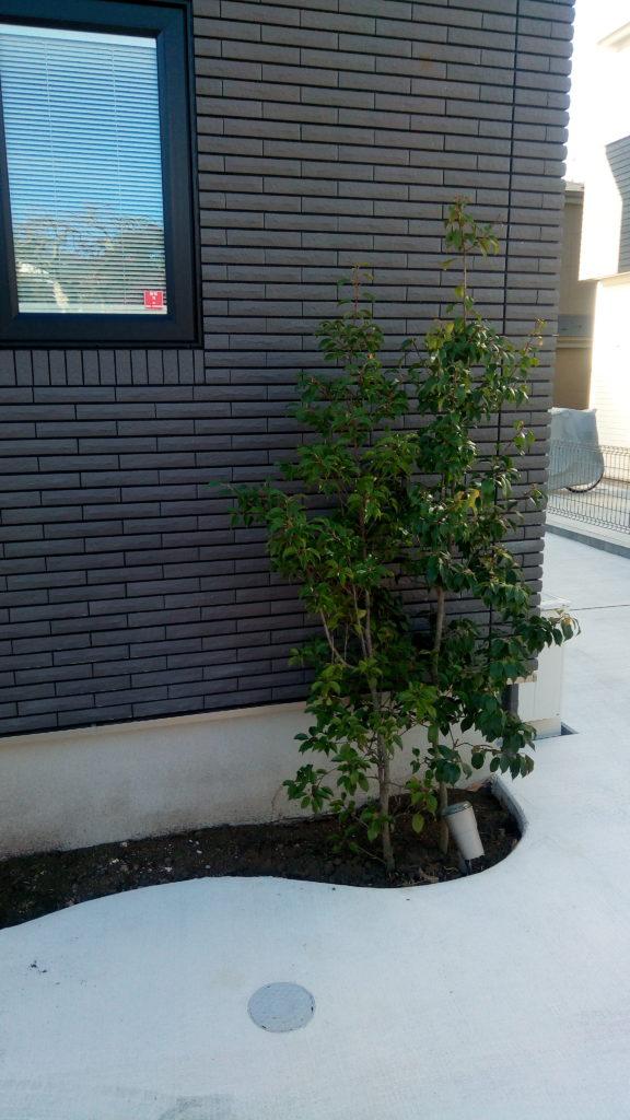 昼間のシンボルツリー