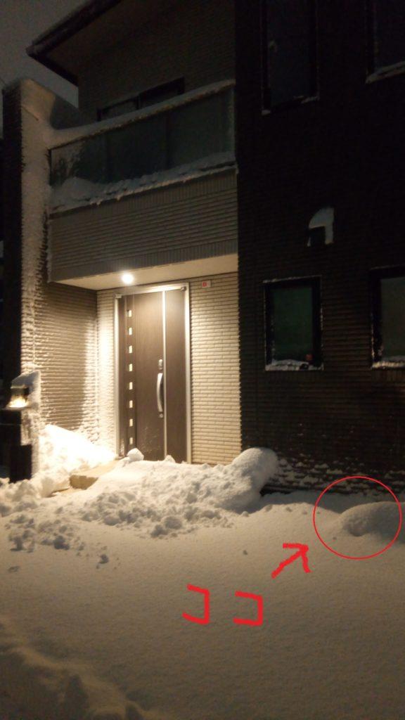 雪の重みに負けた、わが家のシンボルツリー(ヨソゴ)