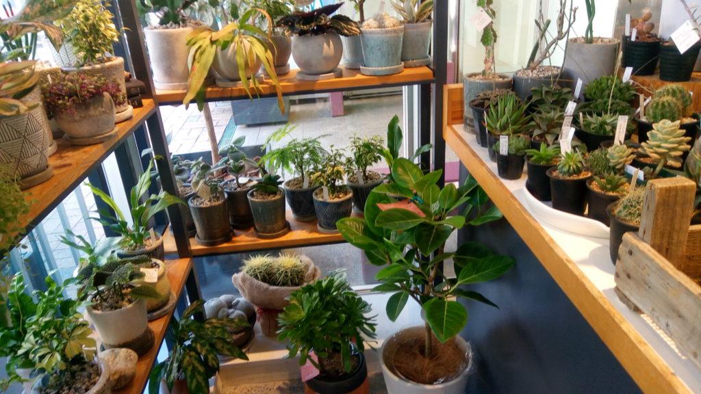 観葉植物の種類はとても豊富