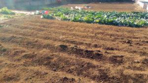 デュアルライフでは家庭菜園も夢ではない
