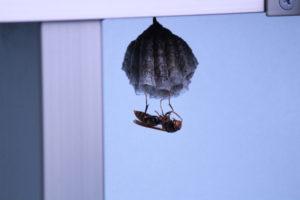 蜂の種類と巣の大きさを確認する。