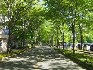 駐車場付近には、多くの緑が出迎えてくれます