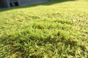 人工芝を毛羽立たせたようす