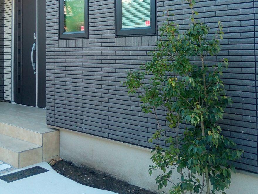 わが家のシンボルツリーのソヨゴ